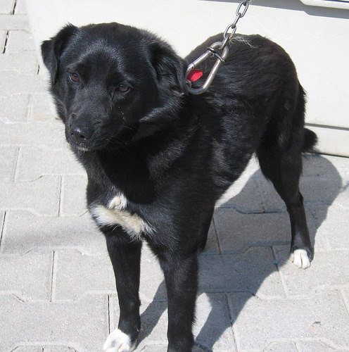 Neshe Stra 223 Enhunde Istanbul Neshe Hunde Aus Der T 252 Rkei Suchen Ein Neues Zuhause