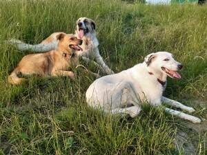 Kuzu, Dilay und Lee